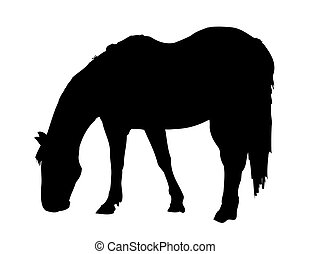 Horse Grazing - Large sillhouette of a horse grazing
