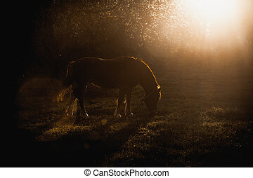 Horse grazing on glade at evening sun rays