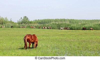 horse grazing on green field