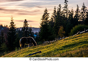 horse grazing on hillside in forest at sunset - lonely horse...