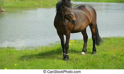 Horse grazing on meadow near river