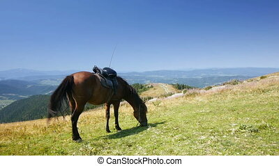 Horse grazing on mountain meadow