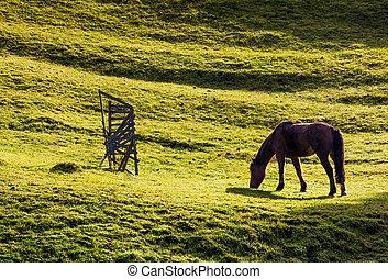horse grazing on the gassy hillside. lovely scenery on farm...