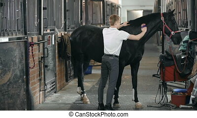 Horse Grooming - Side view of a horse standing in the stall...