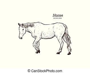 Horse, Hand draw sketch vector.