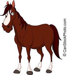 Horse - Handsome horse