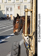 Horse harnessed to a carriage