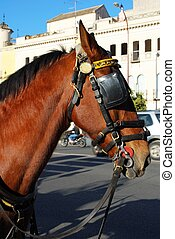 Horse's head and bridle, Seville, Seville Province, Andalusia, Spain.