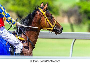 Horse Head Bridle Close-Up Jockey Race Track