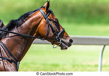 Horse Head Bridle Close-Up Race Track