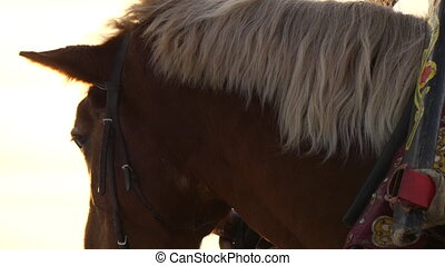 Horse head chewing close up - Beautiful brown horse portrait...