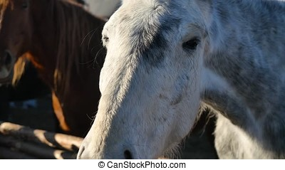 horse head close-up. A head shot of a beautiful bay horse 4K