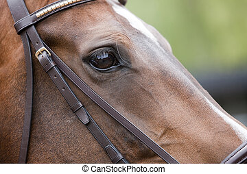 Detail of a horse relaxing before competition, sharpness on the eyes.