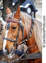 Horse. Head close up.