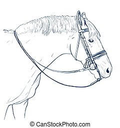 horse head drawing on white. hand-drawn illustration