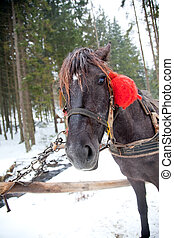 Horse head in snowy forest