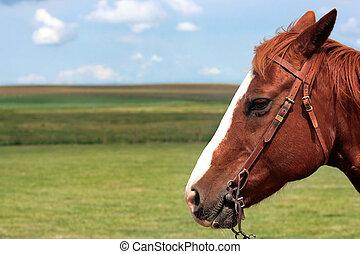 Horse head in Southern Alberta, Canada