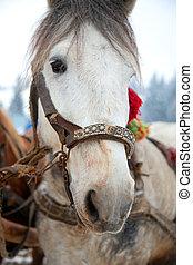 Horse head portrait