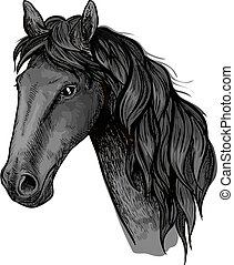 Horse head sketch of black arabian stallion
