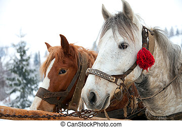 Horse heads in snowy forest landscape