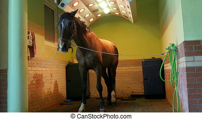 """Horse health care in stable, washing, cleaning and..."