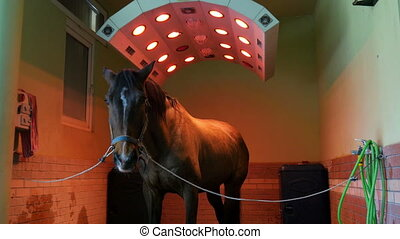 """Horse health care in stable, washing, cleaning and solarium"""