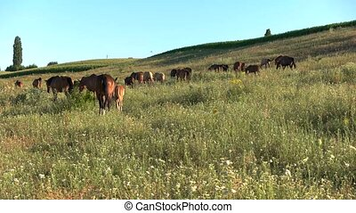 Horse herd on meadow. Animals and blue sky. Clear day at the...