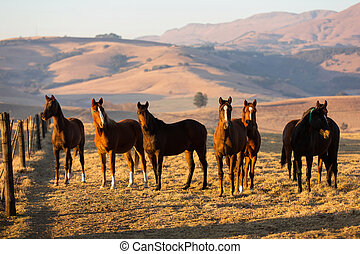 horse herd on the pasture