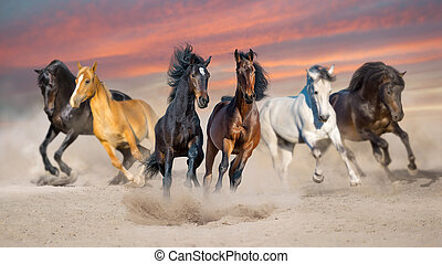 Horse herd run at sunset