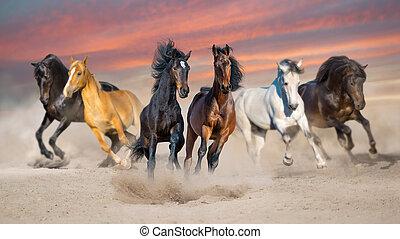 Horse herd run at sunset
