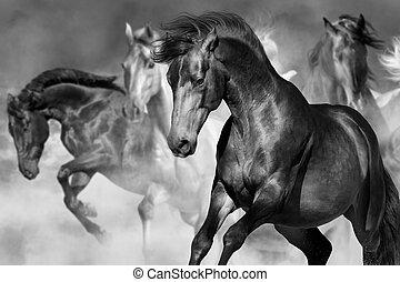Horse herd run - Horse portrait in herd in motion in desert...