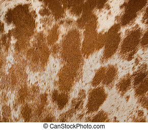 Horse Hide - Close-up of a spotted horse's hair