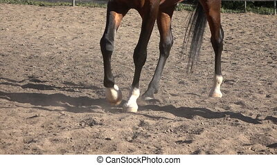 Horse hoof horseshoe slow motion video - Arabian horse...