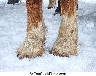 Horse hoof in snow in winter paddock.