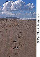 Horse Hoof Tracks on An Empty Beach