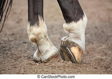 Horse hoofs with horseshoe close up
