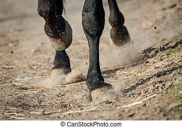 Horse hooves in paddock