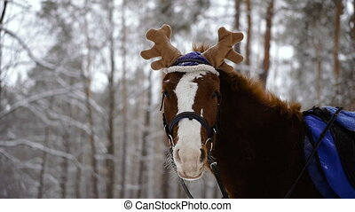 Horse. Horse in a cap with moose horns