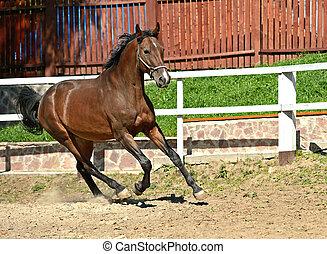 Horse hurrying at a gallop