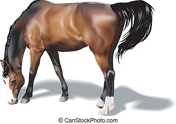 A photorealistic illustration of a horse. Created with meshes.