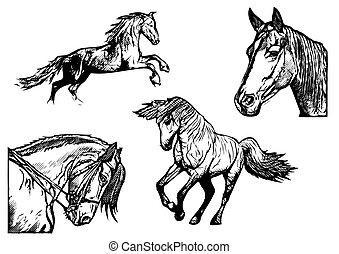 horse illustrations - horse vector illustrations