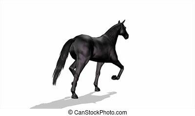horse  - image of horse