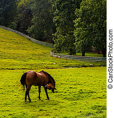 Horse in a farm field in rural York County, Pennsylvania.