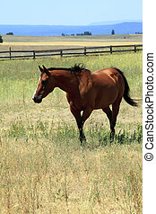 Horse in a field, Washington state. - A horse in a field ...