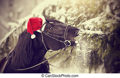 Horse in a red Santa Claus hat eats fir-tree branches