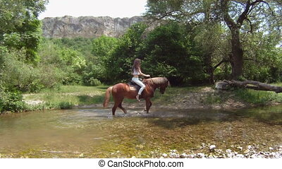 Horse in a river