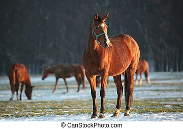 Horse in a snowy pasture