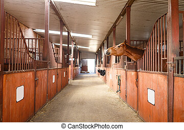 Horse in a stable - Head of horse looking over the stable...