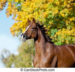 horse in autumn running