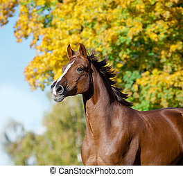 horse in autumn running